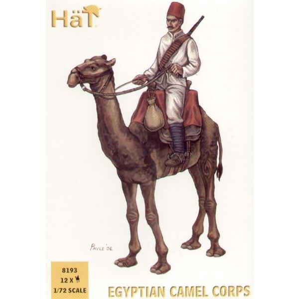 Corps de chameaux égyptien