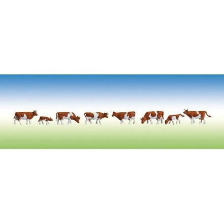 Vaches, tachetées de brun
