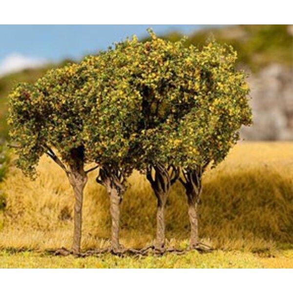 4 PREMIUM Late summer shrubs