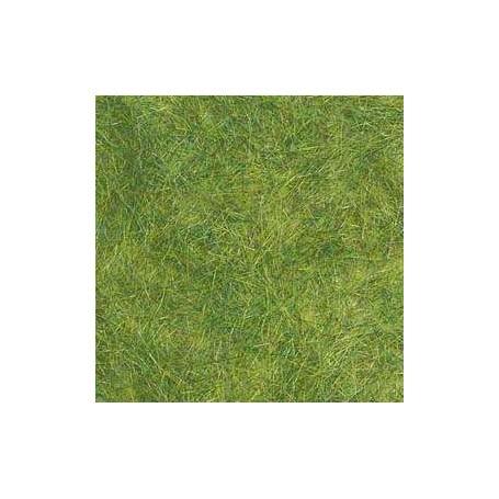 Spring green grass - uv x 5