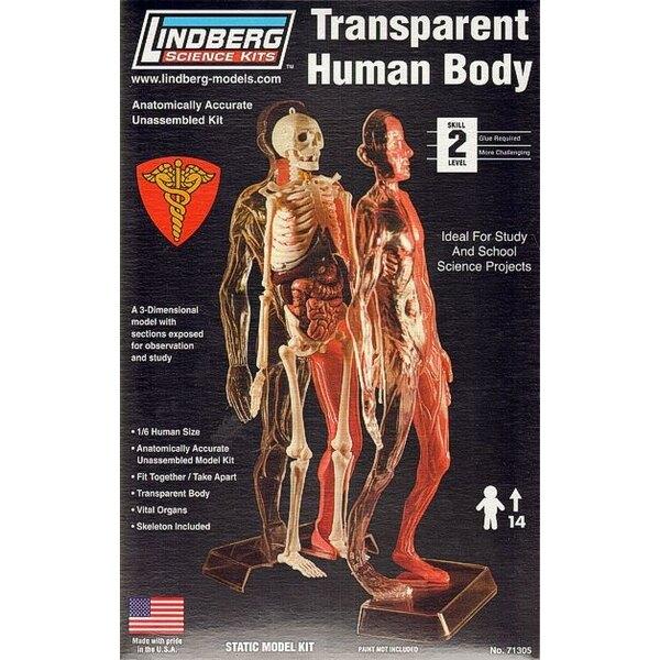 Transparente del cuerpo humano
