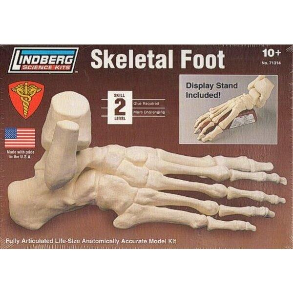 pie del esqueleto