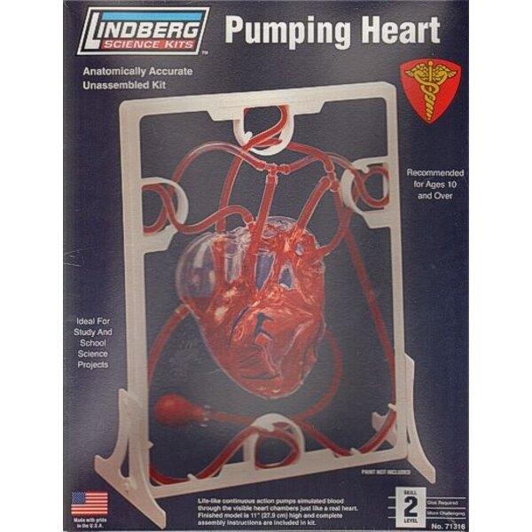 bombeo del corazón