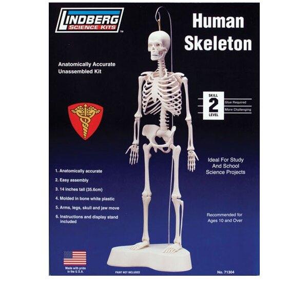 Skelette Humain