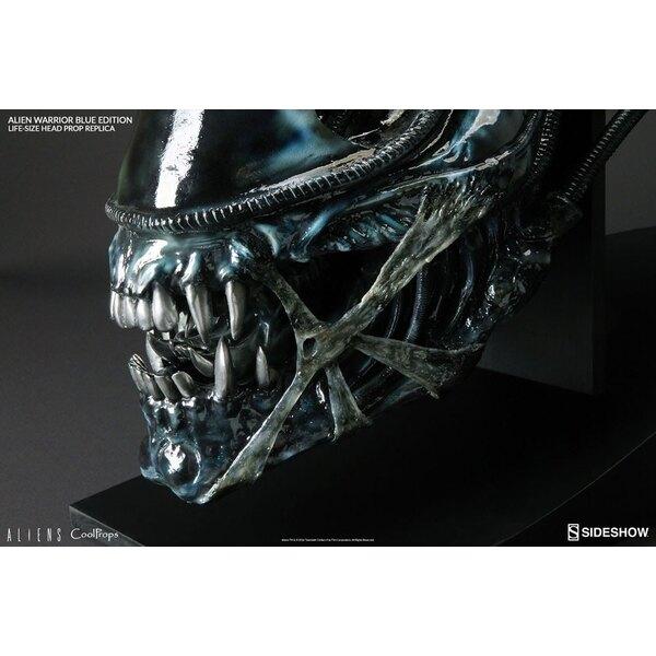 Aliens réplique 1/1 tête Alien Warrior Blue Edition 45 cm